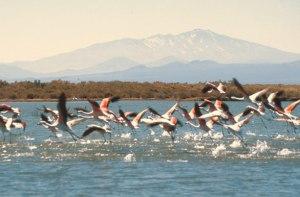 Laguna de Llancanelo: una de las áreas amenazadas